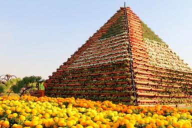 dubai miracles - цветочный сад 12