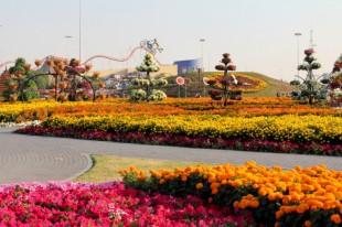 dubai miracles - цветочный сад 16