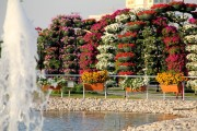 dubai miracles - цветочный сад 24