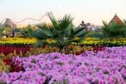 dubai miracles - цветочный сад 26