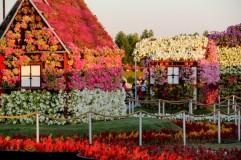 dubai miracles - цветочный сад 5