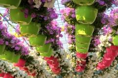 dubai miracles - цветочный сад 9